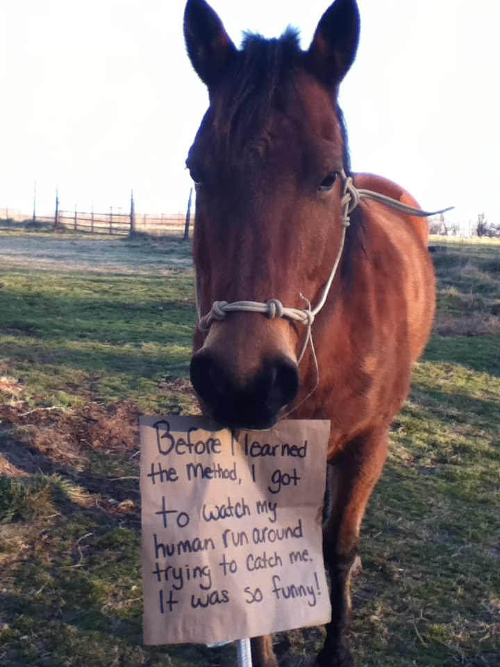 """No Worries Club Contest Entry """"Horse Shaming"""""""