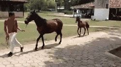 Funny Horse Trot – You go, Prancey McPrance Prance!