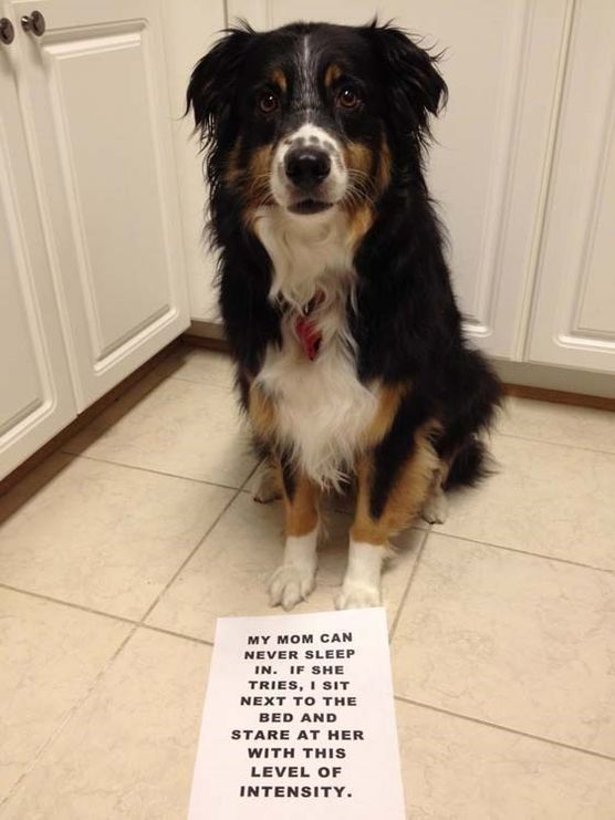 "30 Funny Dog Pictures #funnydogshaming explore Pinterest""> #funnydogshaming"