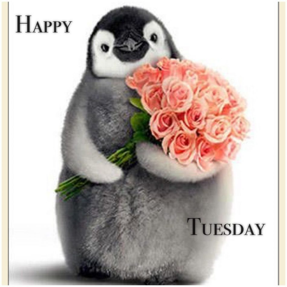 Tuesday Greetings