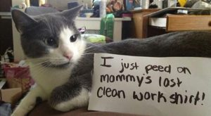 Best Of & #8220;Cat Shaming& #8221; & #8211; 26 Pics. My cat does the…