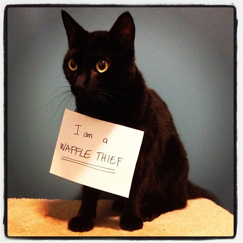 Cat Shaming & #187; Also Into Cats – For the love of the internet!