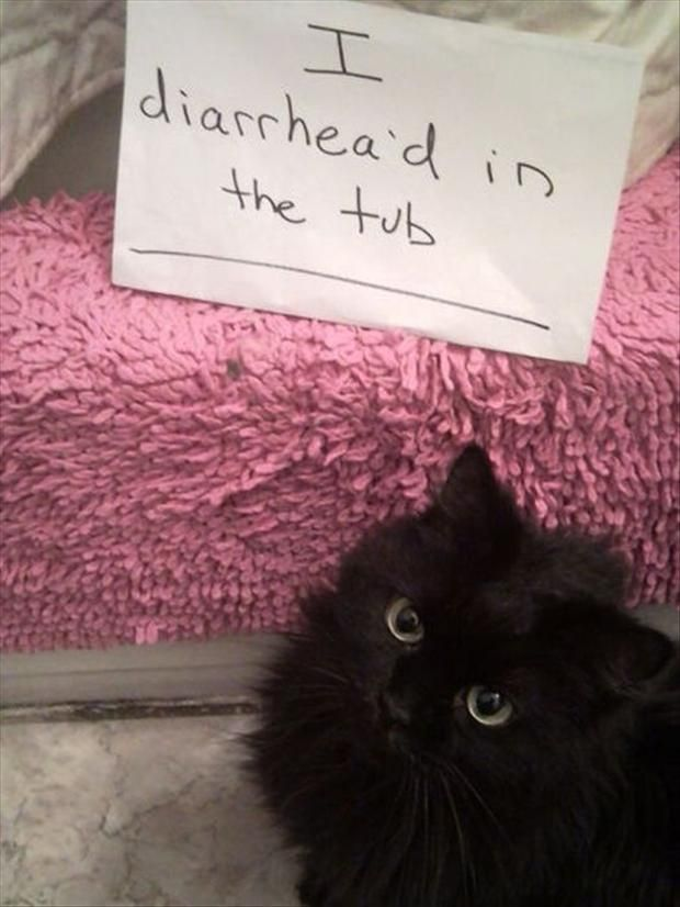 Best Of & #8220;Cat Shaming& #8221; & #8211; 26 Pics