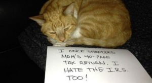 Cat Shaming is the New Dog Shaming