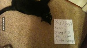 Cat Shaming is actually pretty funny too but A) no on cares about your…