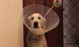 Funny Dog Shaming : This is not funny