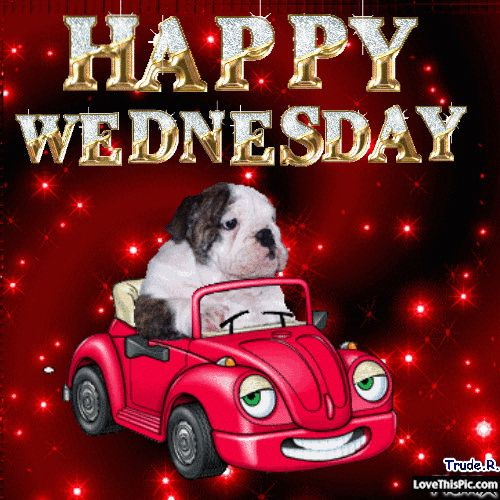 happy wednesday gif | Cute Happy Wednesday Gif Pictures, Photos, and Images for