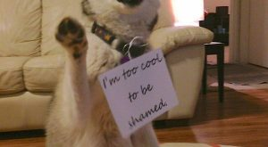 dog shaming: I'm too cool to be shamed