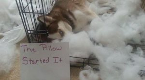 The Pillow Started It