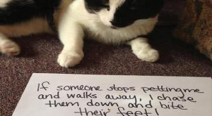 The Best Of Cat Shaming – 24 Pics