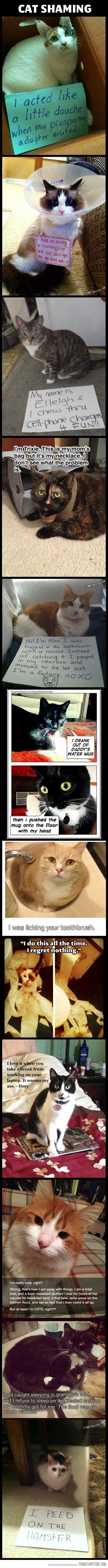 Cat shaming. Equally if not more entertaining than dog shaming, because cats are not…