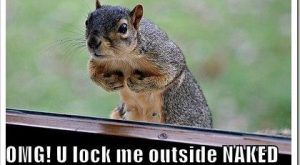 Funny quote about squirrels. You lock me outside naked