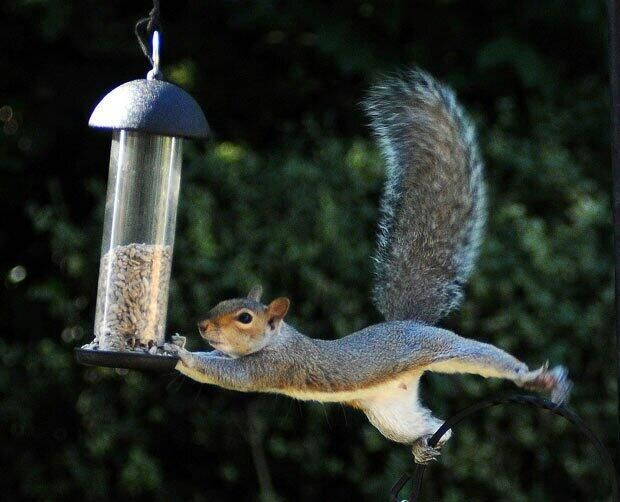 Some squirrels want it to happen, some wish it would happen, great squirrels make…