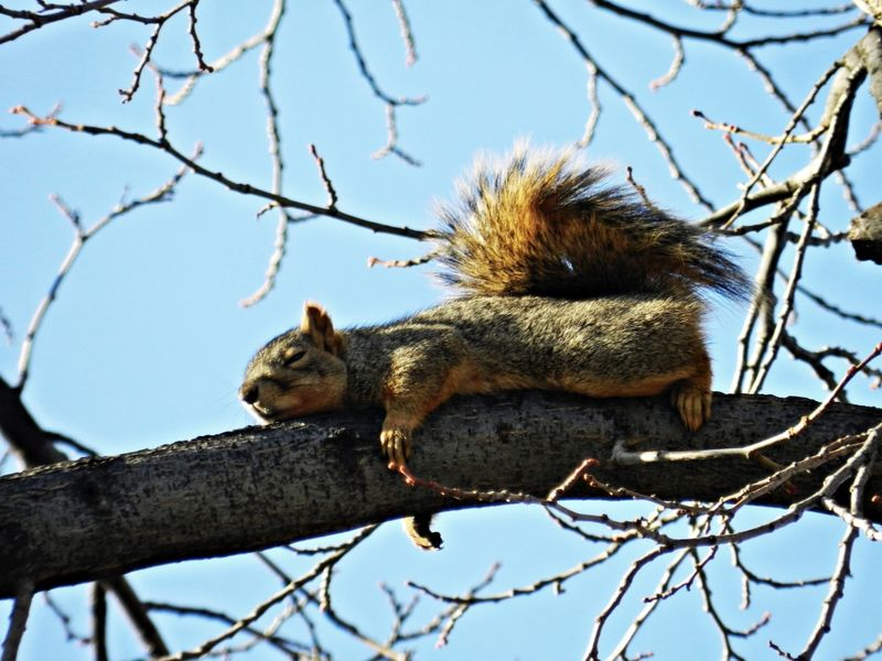 Squirrel Quotes | Squirrel Sleeping On Tree