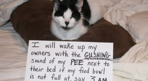 Cat Shaming from Pet Shaming .net