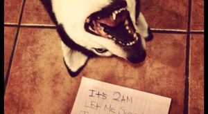 Dog shaming, Part 3!(and the last this time, I think) – Imgur