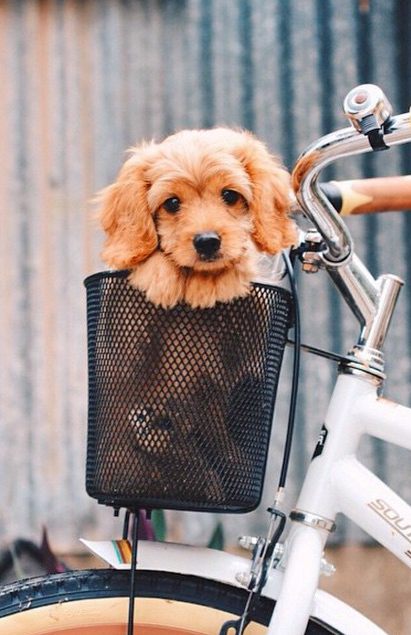 going on a bike ride :)