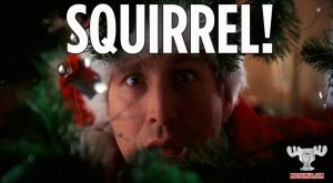 Christmas Vacation Squirrel Quote Squirrel Christmas Vacation Quote Classic Movie Christma...