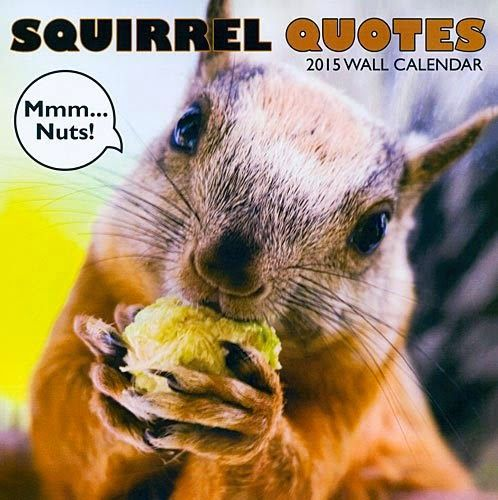 Squirrel – Quotes 2015 Calendar | Find out more at –