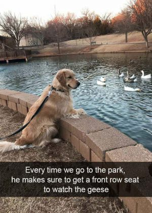 Animal Memes That Are Just Way Beyond Funny – 30