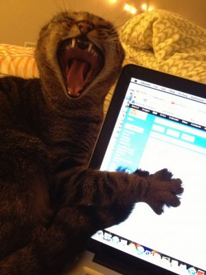 Things You Do That Make Your Cat Hate You With A Passion – Trendzified