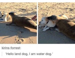 I'm depressed that I laughed very hard at this