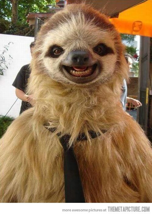 A very photogenic sloth& #8230; (Hay sloth, Is there the person called Chewbacca as…...