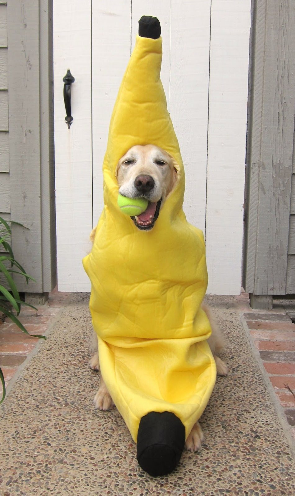 banana with a ball