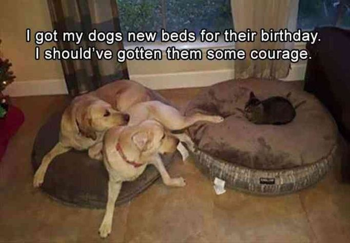 "Funny Animals Pictures #DogLover explore Pinterest""> #DogLover"