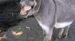 Funny Donkey Meme Faces