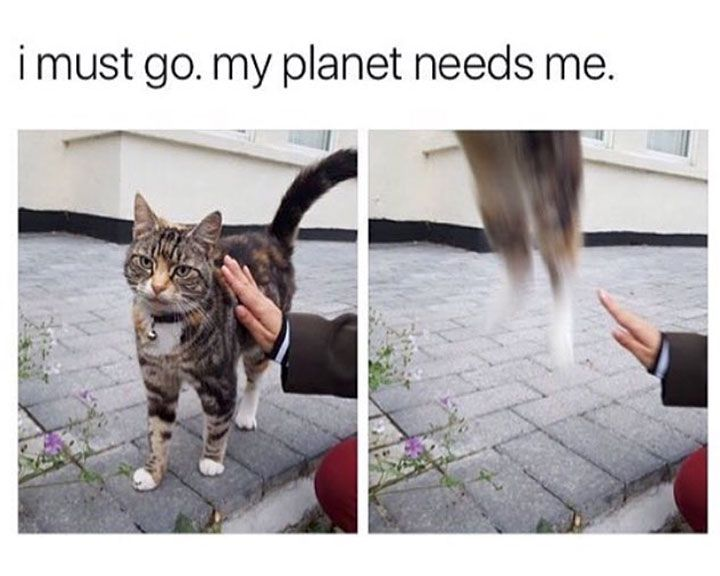 Animal Pictures Memes to Make You Laugh – 6