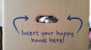 Funny Insert Happy Hands Here Box Cat