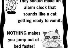 "Image result for funny cat people quotes #catsfunnysayings explore Pinterest""> #cats..."