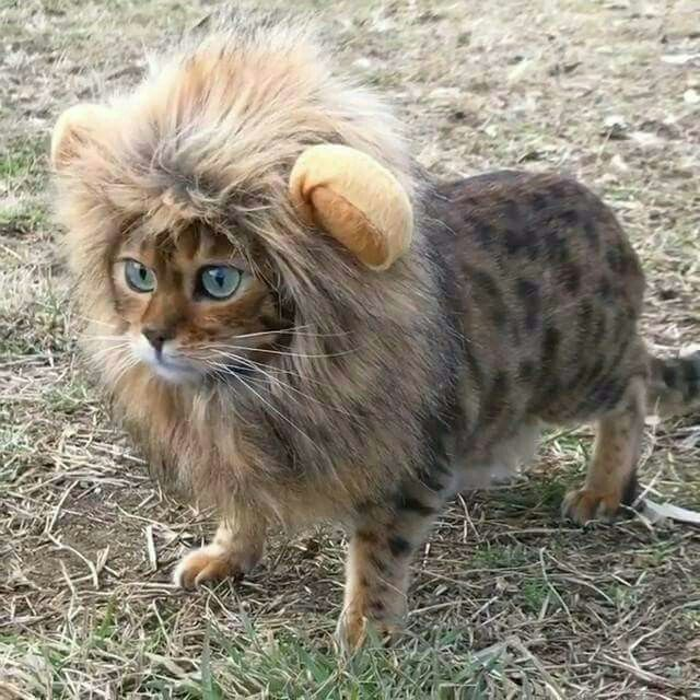 Cat as Cat can