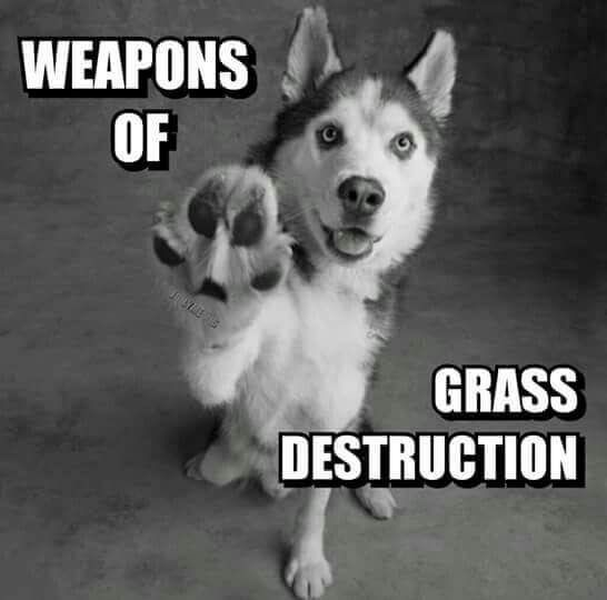 """Siberian Husky owners know how true this is!! #siberianhusky explore Pinterest""""> #si..."""