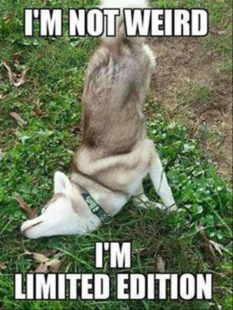 """Funny Animal Picture Dump Of The Day 27 Pics #dogsfunnybaby explore Pinterest""""> #..."""