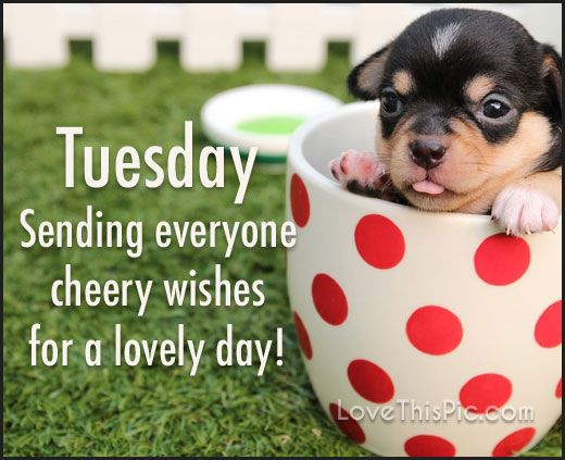 Sending Tuesday Cheer good morning tuesday tuesday quotes good morning quotes…