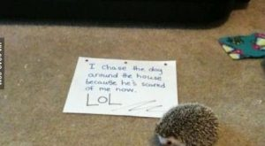 Dogs shame – Funny Pictures, Funny Quotes, Funny Memes, Funny Pics, Fails, Autocorre...