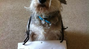 dog shaming | Dog shame. | Funny Things