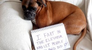 – Dog Shaming – Father's Day Edition24