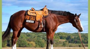 "List your horse, sheep or tack for free on #freelisting search Pinterest""> #freelist..."