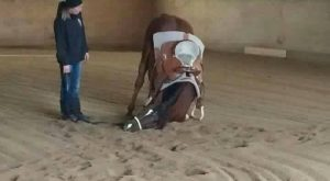 """Funny Horse humor quote! """"I cannot horse today, I haz the dumb."""" Horse looking..."""