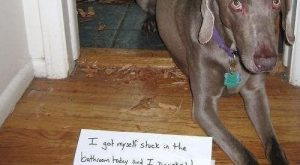 "Best of dog shaming – funny pictures #funnypictures search Pinterest""> #funnyp..."
