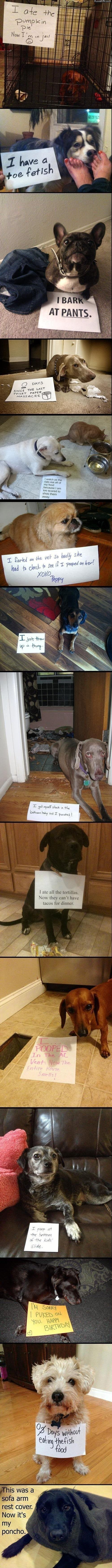 """Best of dog shaming – funny pictures #funnypictures search Pinterest""""> #funnyp..."""