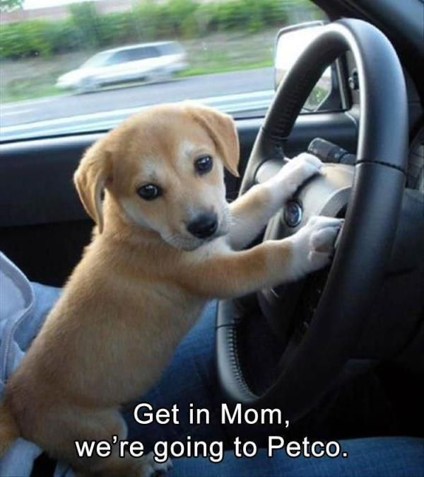 """29 Funny Animal Pictures Of The Day #funny explore Pinterest""""> #funny #picture explo..."""