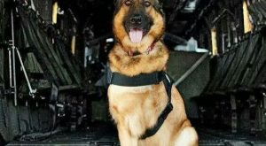 This is Lucca, Lucca is an amputee veteran who served six years in the…