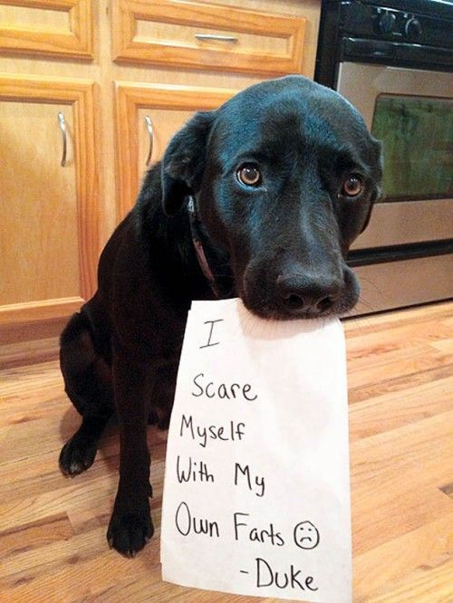 14 Hilarious and Cute Guilty Dogs (Dog Shaming Pics)