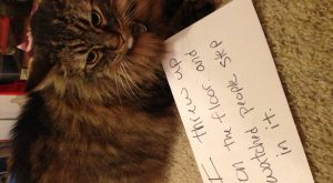 "Cat Shaming lol #cats search Pinterest""> #cats #shaming search Pinterest""> #sh..."