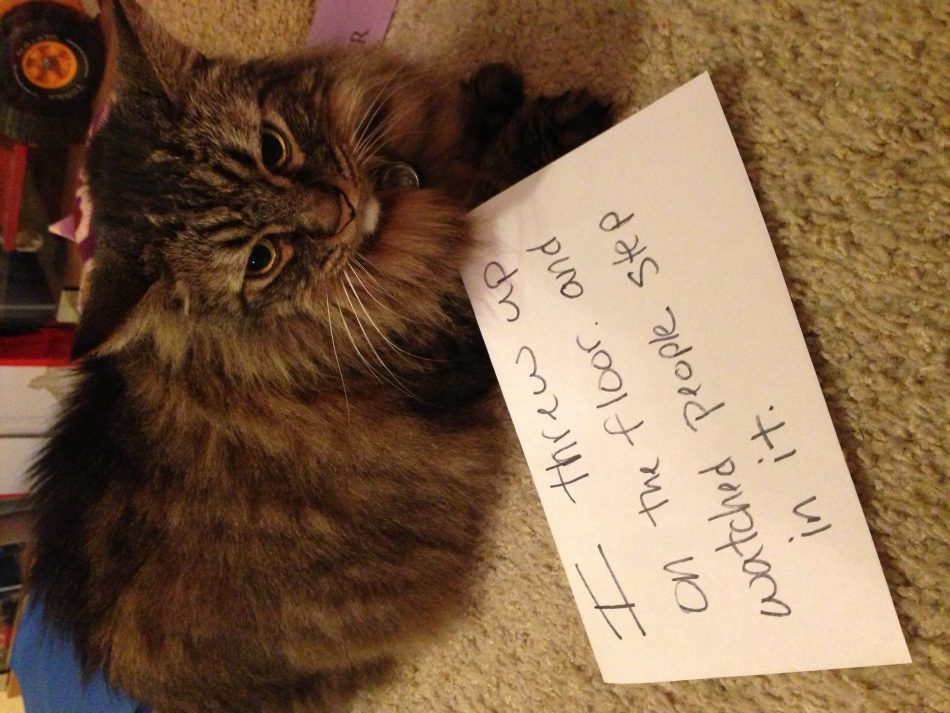 """Cat Shaming lol #cats search Pinterest""""> #cats #shaming search Pinterest""""> #sh..."""