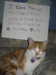 The best of cat shaming – Part 3 | FB TroublemakersFB Troublemakers